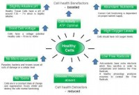healthy cells web