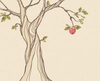 תפוח 3